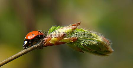 close up inseto verde folhas besouro