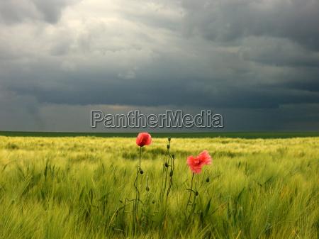 agricola planta verde agricultura planta util