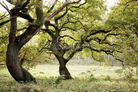 arvore verde folhas outonal tranqueilidade carvalho