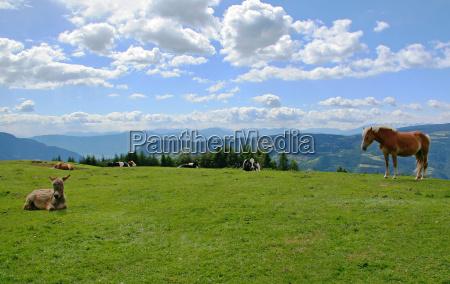 montanhas cavalo dolomitos animais alpes tirol