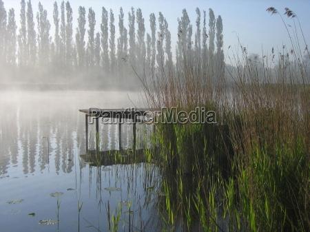 luz nevoeiro neblina cana tranqueilidade gramineas