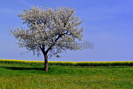 arvore campo flor flores planta prado