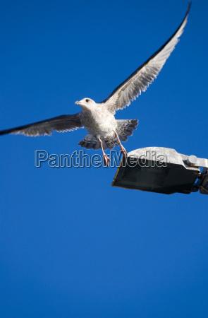azul voo animais partida livre voar