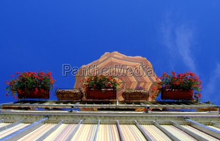 flor flores planta verao varanda guarda