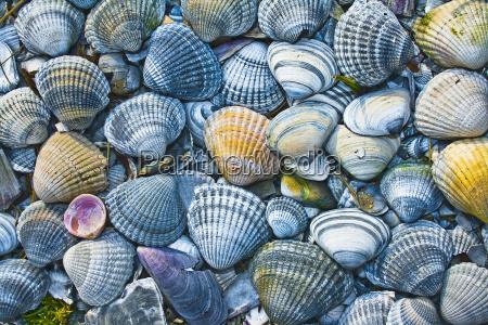 conchas coloridas decoram a praia