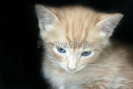 retrato de gato jovem gato ressaca