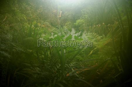 ele vapores na floresta tropical