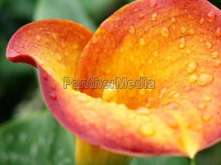 flor planta calice corte de flor