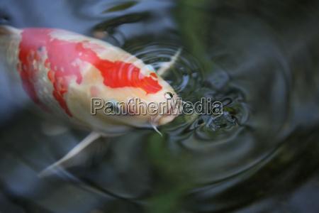 peixe ondas agua doce lagoa agua