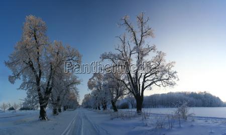 arvore arvores inverno caucasiano avenida neve