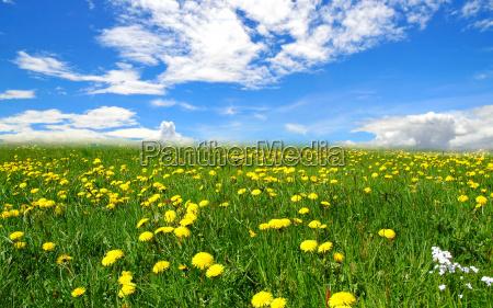 paisagem nuvens prado