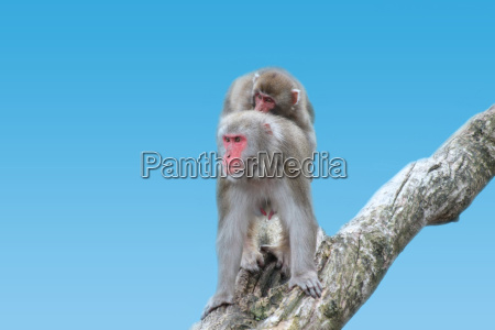 animais macacos natureza