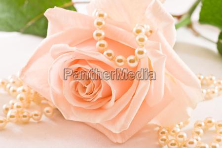 flor planta rosa perolas colar amor