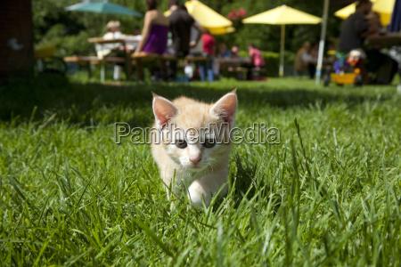 animais animais de estimacao jovem gato