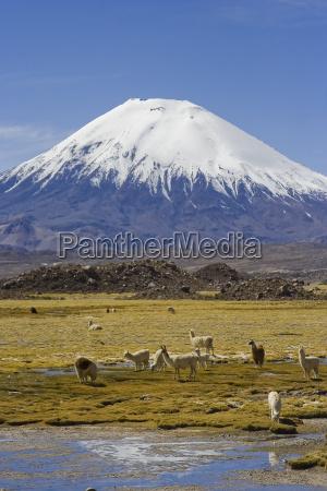 vulcao parinacota
