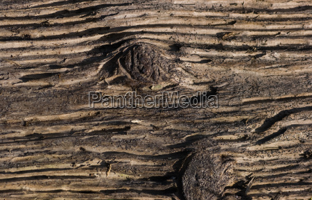 structure in dead wood