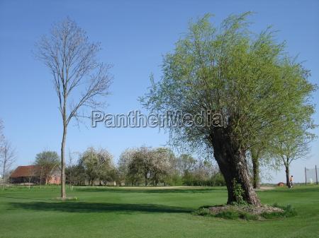 verde golfe jogador de golfe