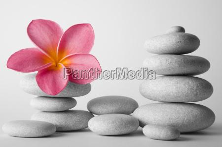 pedra da pilha e do frangipani