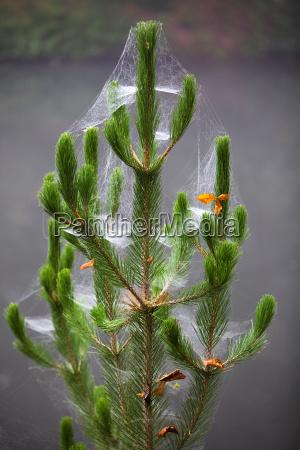 Árvore, de, natal - 2361505