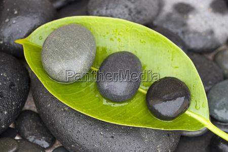 pedras na folha verde
