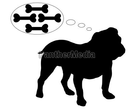 bulldog ingles sonha com muitos ossos