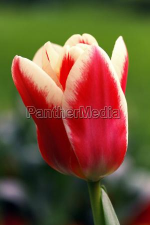 close up jardim flor planta flores