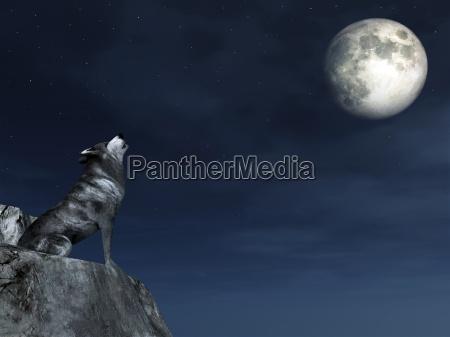 noite lua uivo lobo estrelas asteriscos