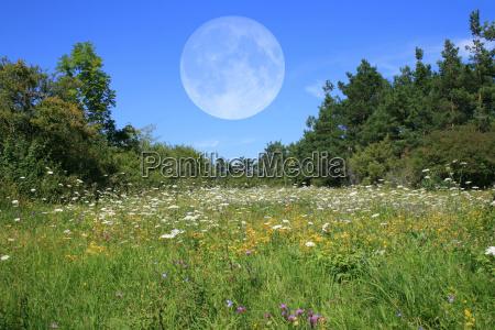 prado com lua