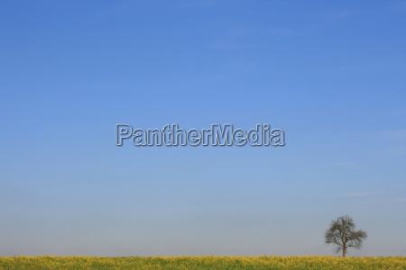rural arvore campo botanica prado ceu