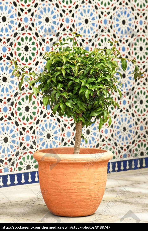 planta, de, vasos - 3138747