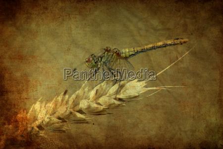 ambiente planta animais berlim libelula libelulas