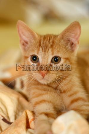 caucasiano pele animais jovens gato ressaca