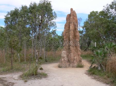 montes da termita