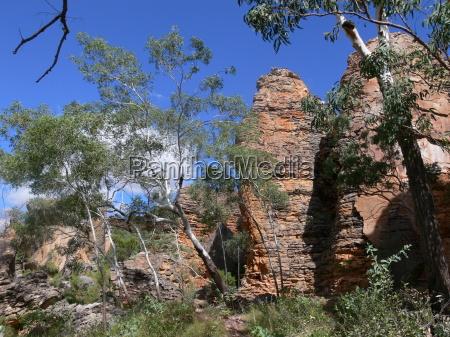 arvore arvores planta rocha australia paisagem