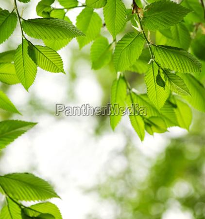 folhas verdes da mola