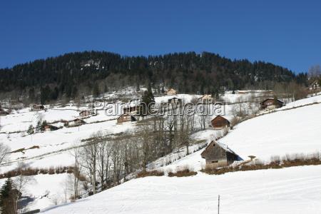 suica velho