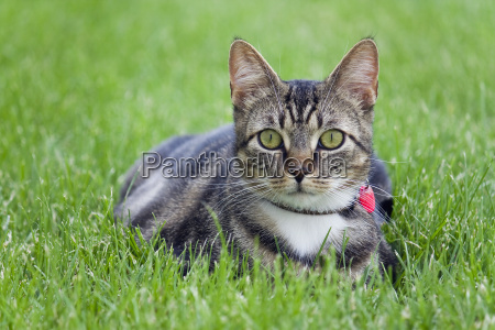 gato alugado pequeno na grama