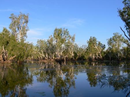 parque nacional australia cacatua agua natureza