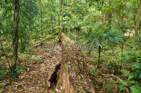 beautiful dorrigo world heritage rainforest