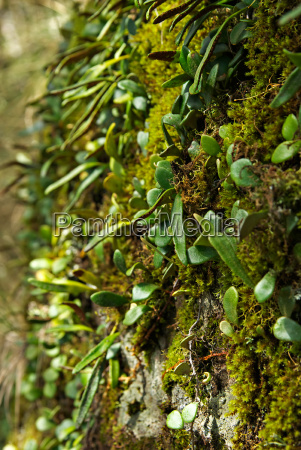 moss and plant