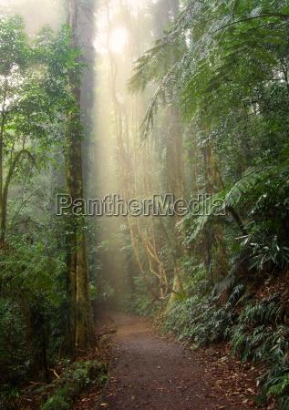 rain, forest, light - 4336817