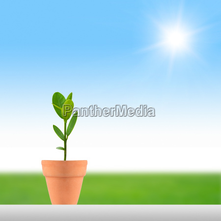 small plant and sun