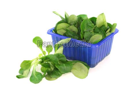 fresh field salad