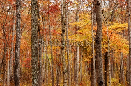 autumn or fall forest
