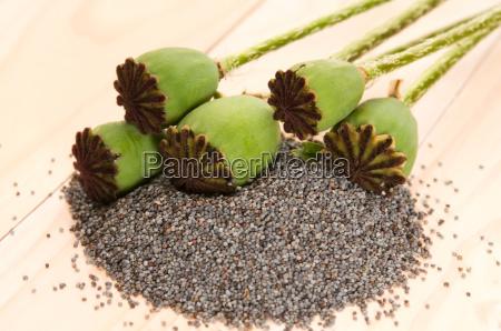 sementes da papoila e cabecas da