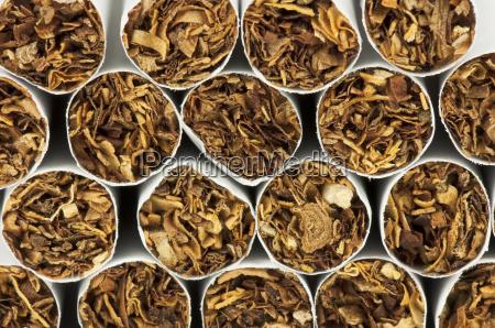 cigarro inclinacao tabaco cancer viciado nicotina