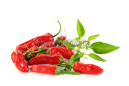 vegetal calabresa vagem pagina pimenta