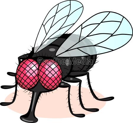 ilustracao da mosca