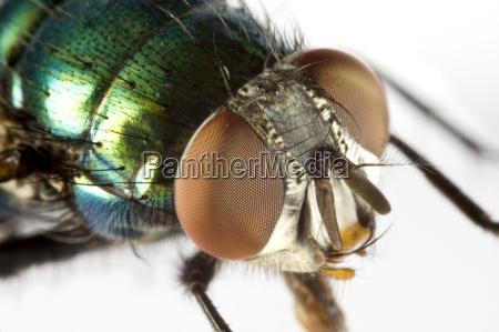 animal inseto voar freio cabeca