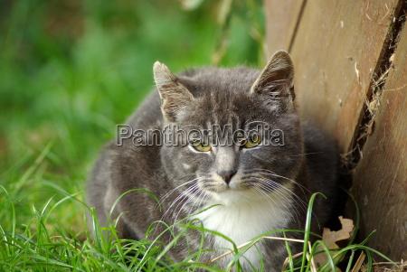 retrato cachorro animais jovens gato ressaca